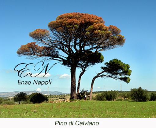 Pino di Calviano (1)