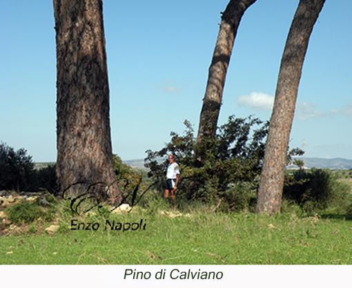 Pino di Calviano (2)